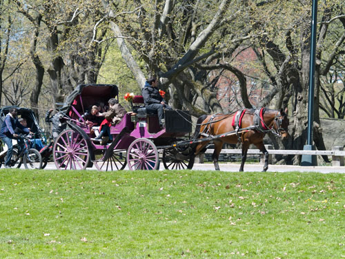 Open carriage ride in Central Park