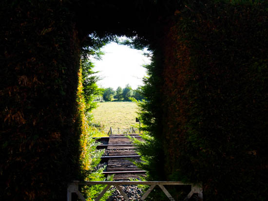 View through a gap in the hedge